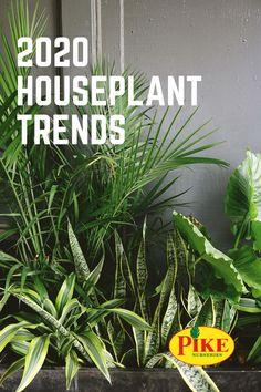 49 Best Houseplants Images In 2020 Indoor Plants Houseplants