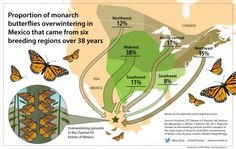 U of G Researchers Identify Monarch Butterfly Birthplaces to Help Conserve Species - Campus News