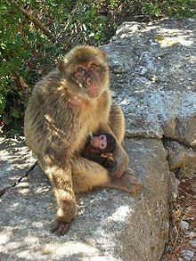Rock of Gibraltar - Wikipedia, the free encyclopedia
