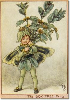 The Box Tree Fairy : Cicely Mary Barker : 1895-1973