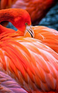 Pretty Flamingo beautiful colors