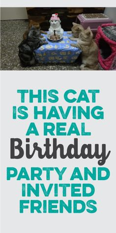 This Cat Is Having A Real Birthday Party And Invited Friends! :)