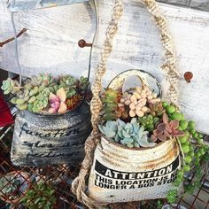 Succulents For Sale, Succulents In Containers, Planting Succulents, Tin Can Art, Mod Podge Crafts, Tin Can Crafts, Succulent Terrarium, Flower Planters, Vintage Crafts