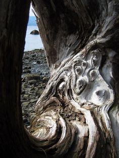 driftwood glimpse by dogsbody, via Flickr