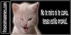 targetitas de envidia   Frases Super Megachulas Para El Tuenti y Facebook