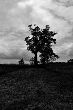 Devil's Tree, Basking Ridge, NJ