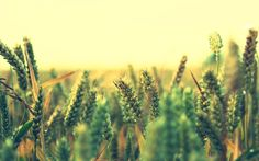 Best Tools To Grow Your Cop And  Increase Your Gross Yield. Find  Best Dealers On  http://findcompany.in/listingcategory/agriculture
