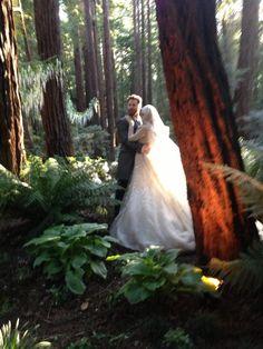 Billionaire Sean Parker fined $2.5 million for Big Sur wedding  oh snap!