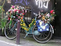 I could pretend to be Dutch and decorate my bike with flowers.