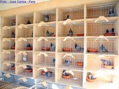 Individual Breeding Boxes