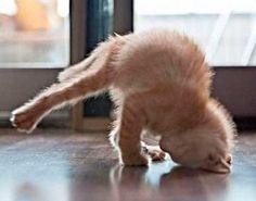 chistes de yoga - Buscar con Google