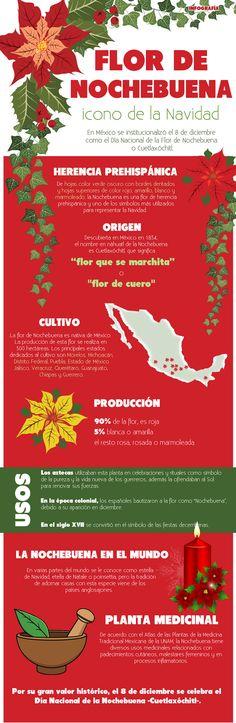 Flor de México