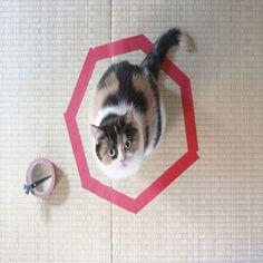 Como muchos saben, los gatos son muy territoriales y tienen necesidad de medir su entorno y encontrar su seguridad. Se está realizando colectivamente un estudio sobre la psicología del comportamiento del gato. Algunas personas notaron que sus gatos se sentían atraídos por los círculos, por lo tanto muchos dueños comenzaron a compartir las fotos de sus gatos ante la reacción del experimento. Parece ser, que al encontrar el círculo, los gatos se introducen en el y sienten seguridad, por lo ...