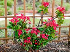 30 shrubs that thrive in the shade creative garden ideas garden bright pink small flower bush a small bush with spiked stems with many thorns and mightylinksfo