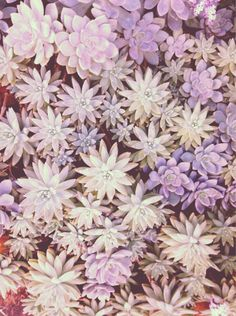 purple toned succulents