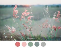 SIERGRAS - Siergras op een vage achtergrond. Mooie zachte tinten groen / grijs en roze / rood.