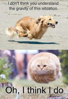 Gravity lesson - Funny pictures