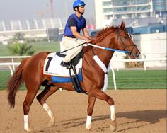 Curlin at Dubai