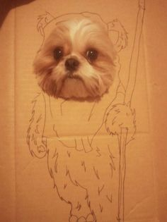 OMG! I wish I would have thought of this...my shih tzu is a total ewok