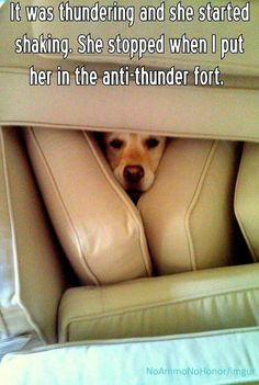 Funny pictures about The anti-thunder fort. Oh, and cool pics about The anti-thunder fort. Also, The anti-thunder fort. Funny Animal Pictures, Dog Pictures, Funny Animals, Cute Animals, Animal Memes, Awsome Pictures, Animal Antics, Animal Humor, Wild Animals