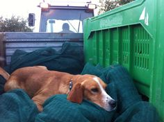Spack in viaggio per la raccolta delle olive www.borgosanmartino.eu