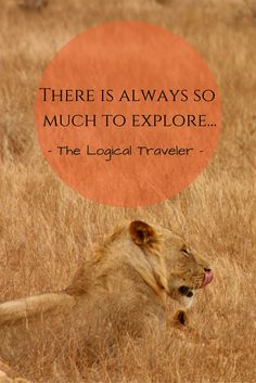 There is always so much to explore. - The Logical Traveler Feeling Sad, How Are You Feeling, Curvy Style, Meaningful Words, Travel Quotes, Travel Ideas, Wise Words, Motivational, Inspirational