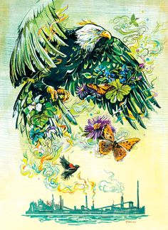The Return of Bald Eagles to Hamilton, ON - Jacqui Oakley Illustration