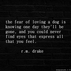 """Quotes and Poetries on Instagram: """"The fear of loving a dog is knowing that one day they'll be gone.. @rmdrk ✖ #poetry#poems#rmdrake#blackbutterfly#quotes#qotd#instamood#instagood#instalike#like4like#love#feelings#sad#happy#broken#empty#lost#feel#depression#poetic#beautiful#words#regram#repost#loveit"""""""