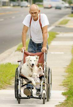 Robert Crews foi flagrado levando seus cães de estimação para passear em uma cadeira de rodas (Foto: Bob Self/The Florida Times-Union/AP)