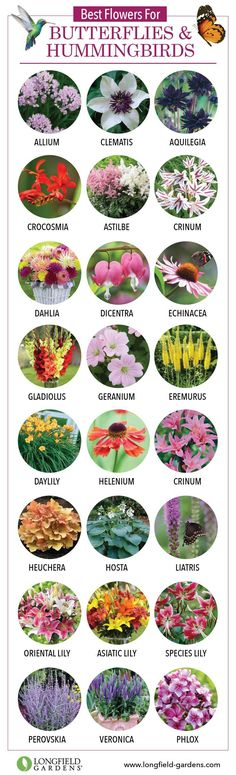 Educational infographic & Data Best Flowers for Butterflies and Hummingbirds. Image Description Best Flowers for Butterflies and Hummingbirds Flowers For Butterflies, Butterfly Plants, Hummingbird Flowers, Hummingbird Garden, Diy Butterfly, Hummingbird Food, Outdoor Plants, Outdoor Gardens, Outdoor Spaces