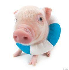 summer piggies - Google Search