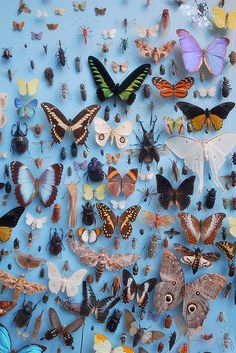 Mostly butterflies (but there are other insects among them, here).