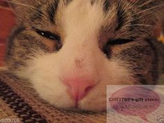 ⊙☉⊙DIGITAL PHOTO/IMAGE CAT/KITTEN HALF ASLEEP (email delivery)⊙☉⊙