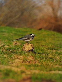 'Little bird' by linnastu Bird, Animals, Animales, Animaux, Birds, Animal, Animais