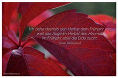 Mein Papa sagt...  Ich ziehe deshalb den Herbst dem Frühjahr vor, weil das Auge im Herbst den Himmel, im Frühjahr aber die Erde sucht.  Søren Kierkegaard    Weisheiten und Zitate TÄGLICH NEU auf www.MeinPapasagt.de