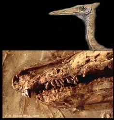 Pelecanimimus Extinct Animals, Prehistoric Creatures, Vertebrates, Weird Creatures, Landscapes, Paleo, Rocks, Artists, Dog