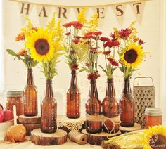 Autumn Decor Harvest Party, Tree Slice Food Risers, Sunflowers, Fall Banner, Caramel Apples and more - KnickofTime.net