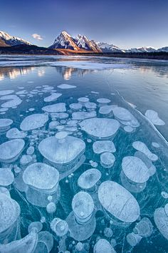 Abraham Lake (Alberta, Canada) is home to a rare phenomenon where bubbles get frozen right underneath its surface. They're often referred to as ice bubbles or frozen bubbles. This has made the lake famous among photographers. Beautiful World, Beautiful Places, Beautiful Pictures, Landscape Photography, Nature Photography, Frozen Bubbles, Foto Picture, Amazing Nature, Beautiful Landscapes