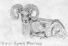 Rough sketch of a Konya Mouflon.
