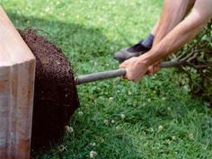 Gently Remove Fruit Tree from Nursery Pot