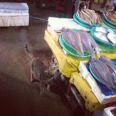 .@cyewonn   생선 가게에서 키우는 고양이. 넌 참 복받았구낰ㅋㅋ 13년 9월 #벌교 #시장 #생선...   전라남 보성 벌교 벌교   2013 09 22  