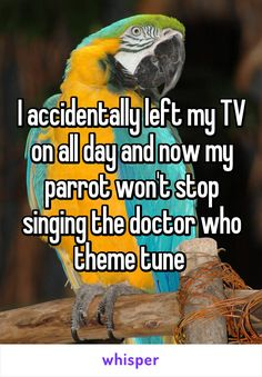 I accidentally left my TV on all day and now my parrot won't stop singing the doctor who theme tune