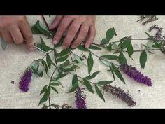 (9) Rozmnażanie Budleji - YouTube Garden Design Pictures, Small Garden Design, Back Gardens, Small Gardens, Ladybug Garden, Garden Club, Bonsai, Backyard, Flowers
