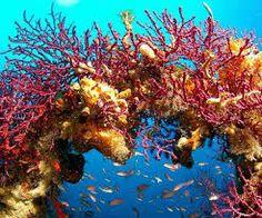 Le Migliori 103 Immagini Su Fondali Marini Del 2016 Coral Reefs