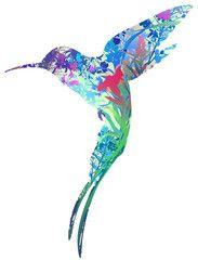 Le Chant Du Colibri Tirage : chant, colibri, tirage, Idées, Olfacto, Huiles, Essentielles, Colibri,, Illustrations,, Tirages, Gratuits