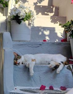 cat sleeping on the steps, greece Crazy Cat Lady, Crazy Cats, I Love Cats, Cool Cats, Photo Chat, Sleepy Cat, Cat Sleeping, All About Cats, Here Kitty Kitty