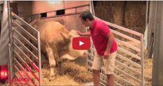 MÉXICO Y EE.UU WAO! Este Video Lo Han Visto Mas De 92 Millones De Personas! Este Toro Estuvo Encadenado Durante Toda Su Vida… Ahora Mira Lo Que Hace Cuando Es Puesto En Libertad , Todo El Mundo Queda en Shock!