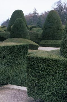 Topiary in the Formal Garden - Chirk Castle, Wrexham