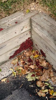 How to Get Rid of Boxelder Bugs Outside. Boxelder bugs, which are often drawn to boxelder and maple trees, are known for congregating in large groups. Luckily, they won't do much damage to your home or your plants, but they can still be a. Box Elder Bugs, Stink Bugs, Maple Tree, Animal Control, Natural Garden, Pest Control, Gardening Tips, Weed, Helpful Hints