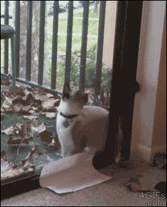 わずかなスキマから器用に侵入してくるネコ。体やわらかすぐるwwwww
